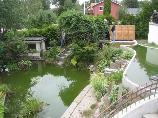 Trädgård trädgård betong : Dammbesök 2010 |